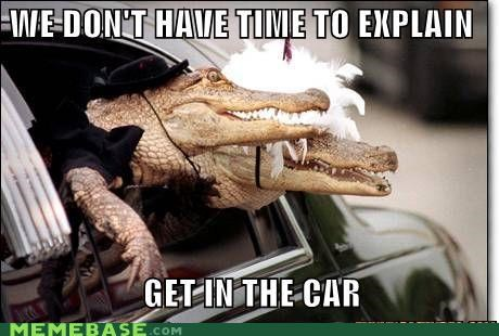 car,crocodile,explain,lizards,Memes,no time