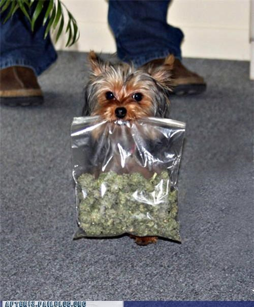 crunk critters dime bag doggy bag marijuana pot puppy - 5248307200