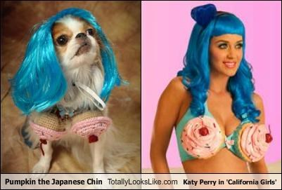 animals,bikini,blue hair,california girls,dogs,japanese chin,katy perry,pet,pumpkins