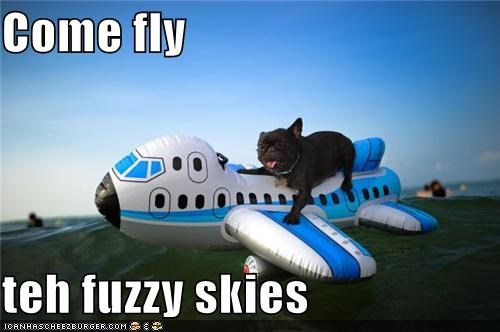 airplane fly fly the friendly skies french bulldogs plane silly dog toy