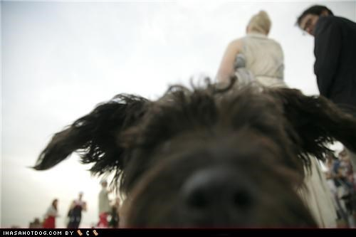 photobomb terrier wedding whatbreed - 5248688384