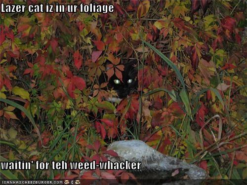 Cheezburger Image 5248742144