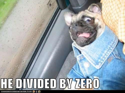 divide divided by zero math pug shocked what wtf zero