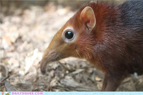 baby double meaning nose nosy pun shrew squee spree - 5249186560
