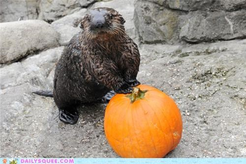 acting like animals,lolwut,nickname,otter,pet name,playing,pumpkins,relationship,sea otter