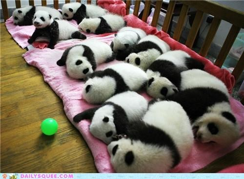 Babies baby crib cuddling Hall of Fame panda panda bear panda bears sleeping unbearably squee