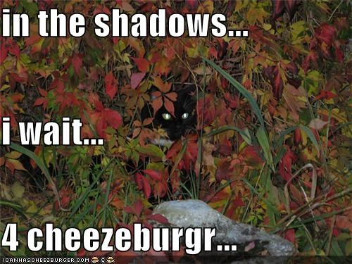 Cheezburger Image 5249255424