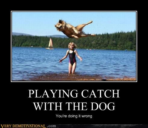 animals catch dogs hilarious wrong wtf