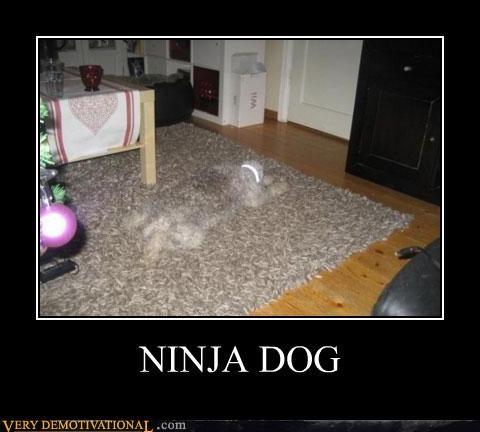 dogs hilarious ninja photoshop - 5249857536