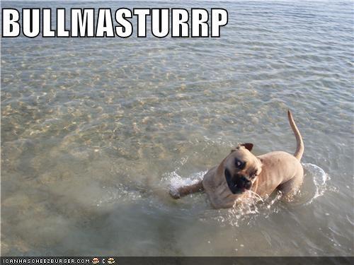 bull mastiff derp silly dog swim water - 5249950464