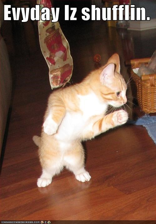 animals Cats dancing every-day-im-shuffling I Can Has Cheezburger lmfao Songs