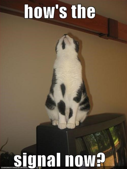 animals Cats I Can Has Cheezburger rabbit ears reception technology TV