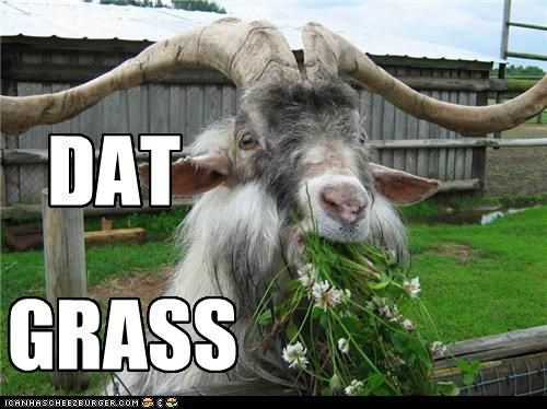 dat ass,eating,flowers,goats,grass,I Can Has Cheezburger,Memes