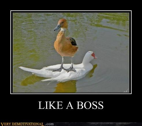 ducks hilarious Like a Boss - 5250461696