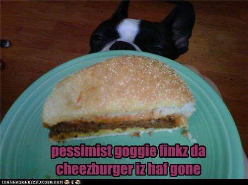 boston terrier,cheeseburger,food,noms,people food,pessimist,pessimistic