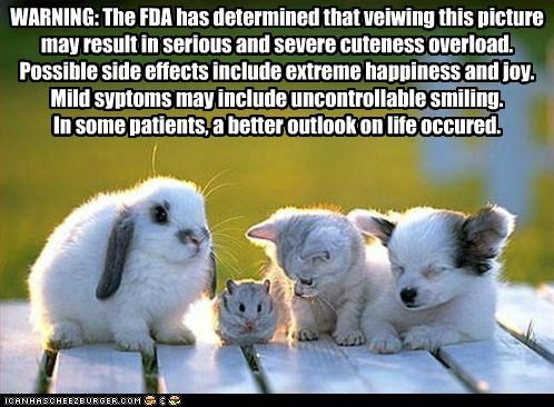 adorbz awww bunny cute cuteness friends friendship hamster happiness happy kitten puppy smiling - 5250792448