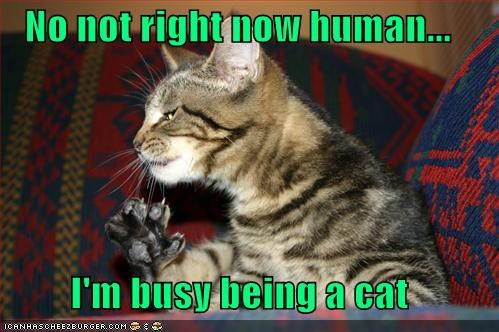 being busy caption captioned cat excuse explanation human no not now right - 5250834176