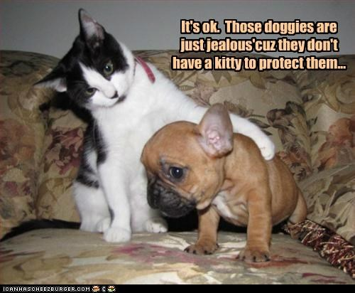 It's ok. Those doggies are just jealous'cuz they don't have a kitty to protect them...