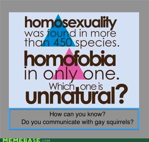 homosexuality phobia squirrels Text Stuffs - 5250997760