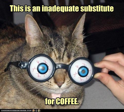 best of the week caption captioned cat coffee glasses Hall of Fame inadequate lolwut substitute this - 5251256576