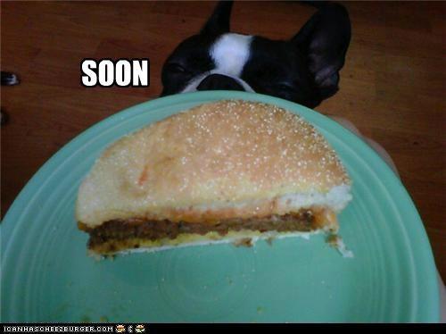 Cheezburger Image 5251434496
