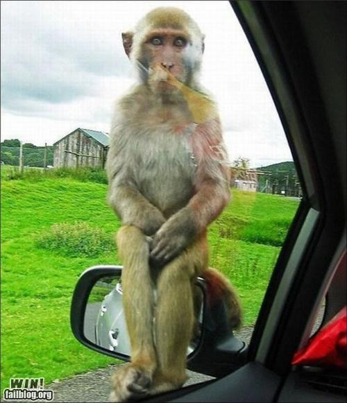 animal,car,hi,hi there,monkey,photography,visit