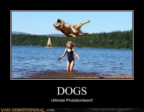 dogs hilarious wtf - 5251657728