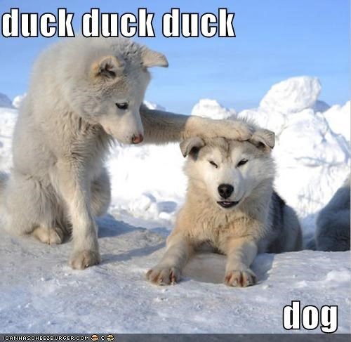 animals,dogs,duck duck goose,games,i has a hotdog,puppies
