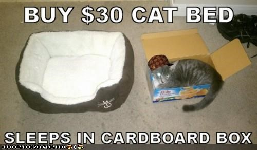beds,boxes,cardboard box,expensive,memecats,Memes,rude,Scumbag Steve