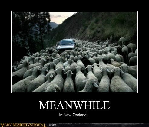 Meanwhile,new zealand,Pure Awesome,sheep