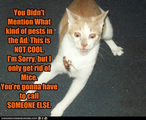 You Didn't Mention What kind of pests in the Ad. This is NOT COOL. I'm Sorry, but I only get rid of Mice. You're gonna have to call SOMEONE ELSE.
