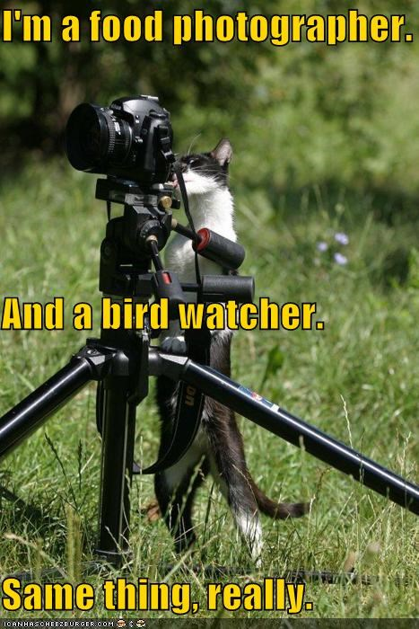 birdwatcher camera caption captioned cat food photographer same same difference same thing thing