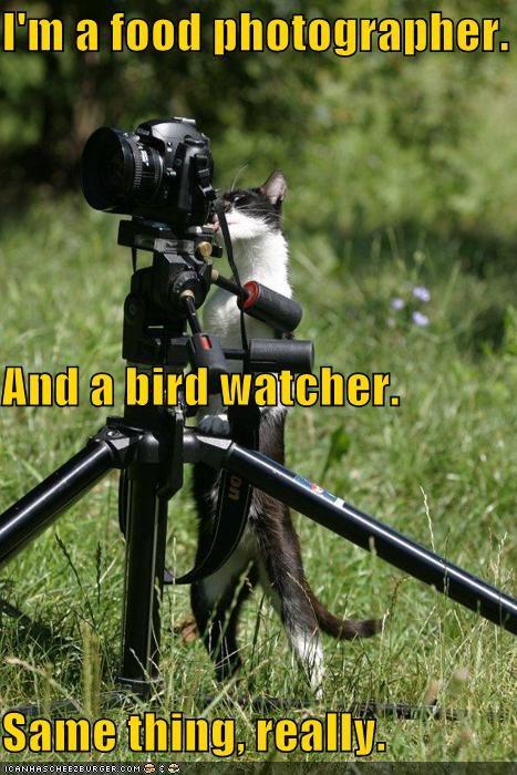 camera caption captioned cat food photographer same thing - 5252618240