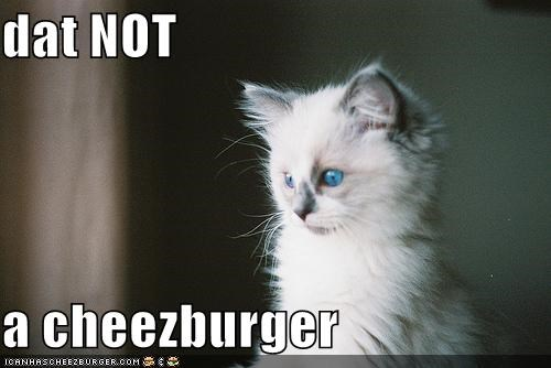 Cheezburger Image 5252678144