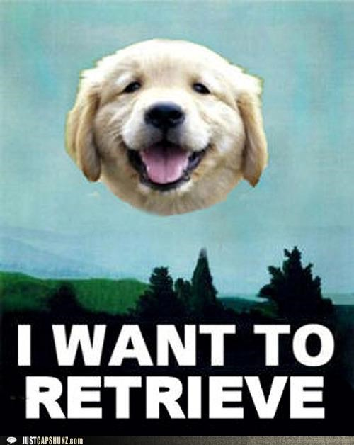animals golden retrievers i has a hotdog I WANT TO BELIEVE puns x files - 5252795136
