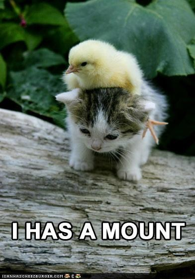 birds chicks classics Interspecies Love kitten mount - 5252836096
