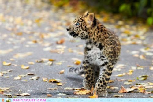 autumn baby change colors cub Hall of Fame leaves leopard seasons surprised wide eyed