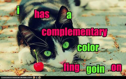 caption,captioned,cat,color,compliment,complimentary,happening,matching,thing