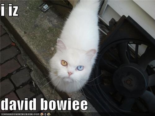 i iz  david bowiee