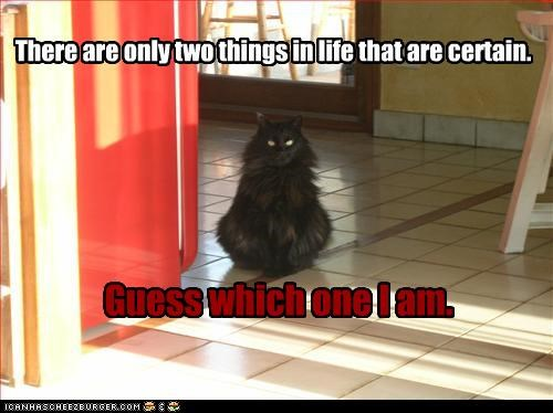 am,caption,captioned,cat,certain,Death,death and taxes,guess,I,life,taxes,things,two,which