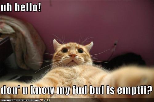 uh hello!  don' u know my fud bul is emptii?