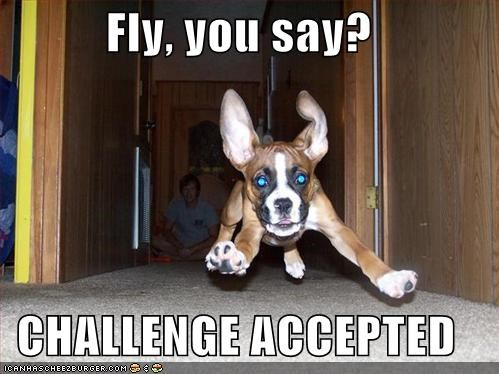 boxer Challenge Accepted fly flying fun having fun pounce puppy - 5253410560