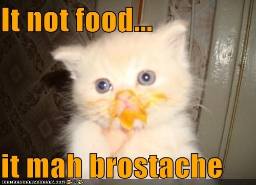 awww,brostache,cat,cute,food,I Can Has Cheezburger,kitten,mustache
