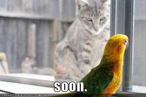 animals birds Cats I Can Has Cheezburger Memes predators SOON - 5253464320