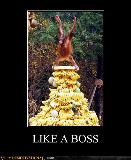 ape excited Like a Boss monkey Pure Awesome - 5253541632