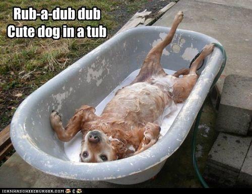 bath bath time bathtub bubbles labrador retriever rub a dub soap suds tub water - 5253551360