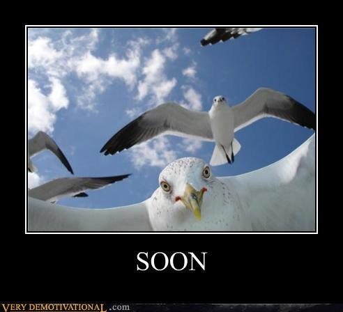 birds creepy seagulls SOON Terrifying