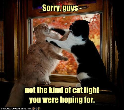 Sorry, guys - not the kind of cat fight you were hoping for.