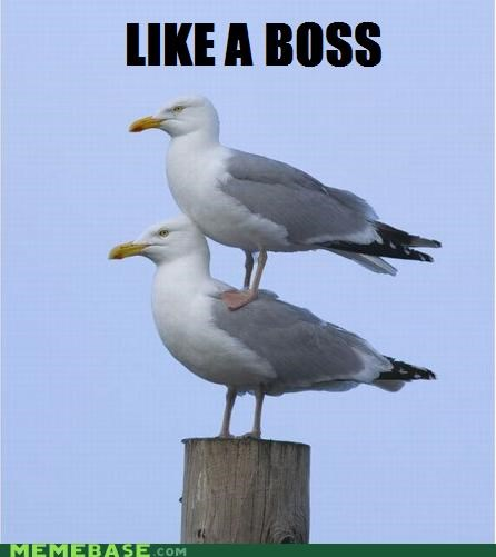 birds,Like a Boss,same,seagull,standing,what