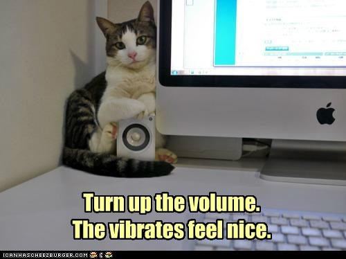 caption,captioned,cat,computer,feel,Music,nice,request,sitting,speaker,turn,up,vibrations,volume